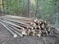 VZ: Prodej dřevní hmoty Nepomuk 14.09.2015
