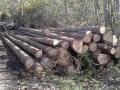 Prodej dřevní hmoty Nepomuk 12.10.2015