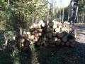 Prodej dřevní hmoty Nepomuk 14.10.2015