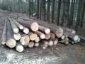 Prodej dřevní hmoty Nepomuk 07.12.2015