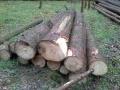VZ: Prodej dřevní hmoty Nepomuk 18.04.2016