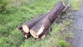 Prodej dřevní hmoty Nepomuk 30.05.2016