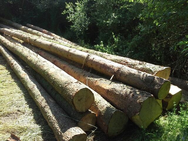 Prodej dřevní hmoty Nepomuk 30.06.2016