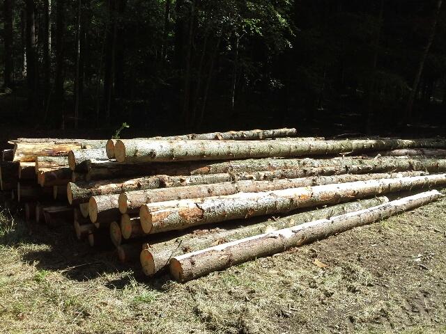 Prodej dřevní hmoty Nepomuk 23.08.2016