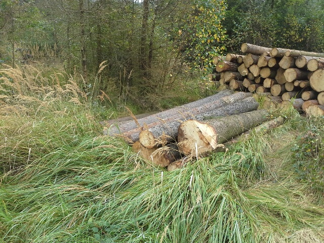 Prodej dřevní hmoty Nepomuk 23.09.2016