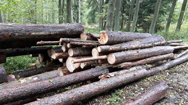 Prodej dřevní hmoty Nepomuk 13.10.2016
