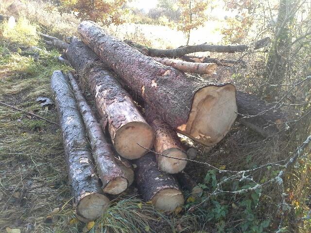 Prodej dřevní hmoty Nepomuk 08.11.2016