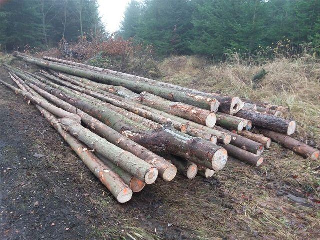 Prodej dřevní hmoty Nepomuk 28.11.2016